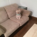 Pleasanton-Sofa-Pet-Stain-Cleaning