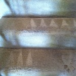 Pleasanton-Stairs-Carpet-Cleaning