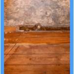 Wall-Mold-Removal-Pleasanton
