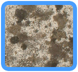 Water-Mold-Removal-Pleasanton
